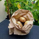 Brown Paper Bag with Spuds